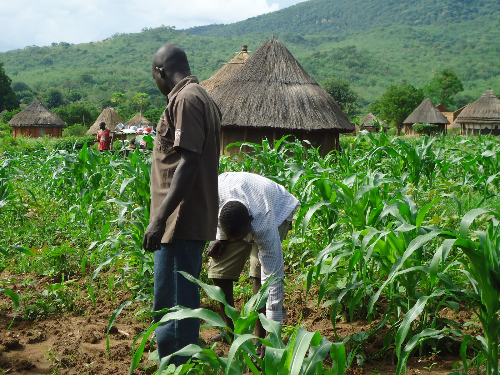 Is Agriculture the Solution to Youth Unemployment?   Startup Kenya